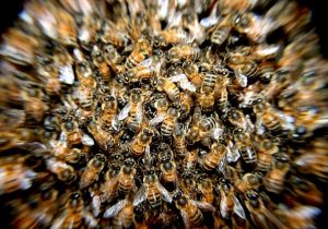Bee Swarm Shuts Down Pasadena Block